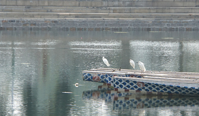 water-bird-travel-lake-watercraft picture material