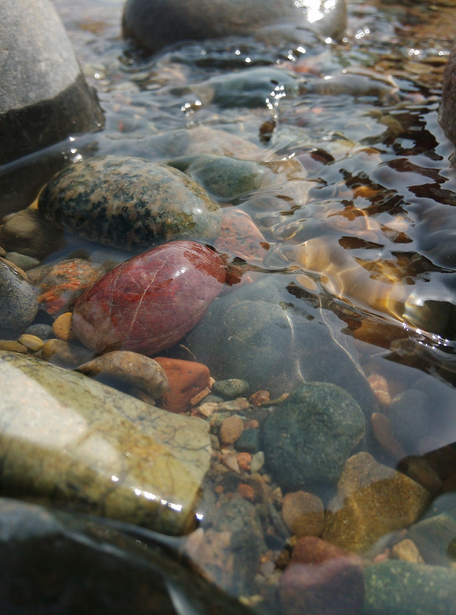 water-no-person-nature-river-fish picture material