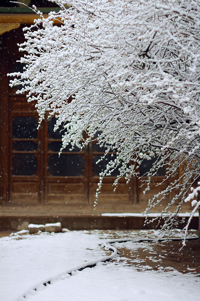 snow-winter-frost-no-person-cold 图片素材