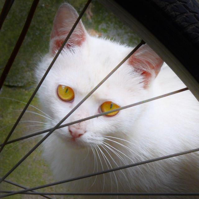 cat-animal-pet-portrait-eye 图片素材