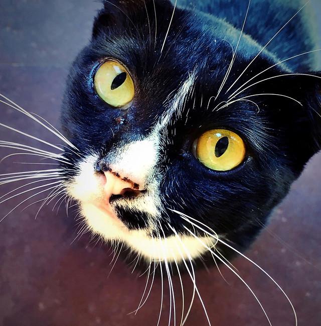 portrait-cat-eye-pet-animal 图片素材