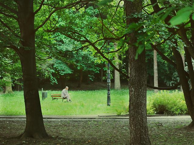 tree-landscape-park-leaf-wood 图片素材