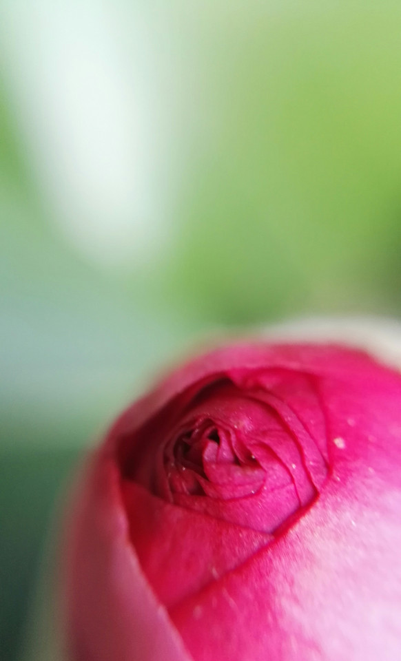 flower-nature-flora-blur-pink picture material