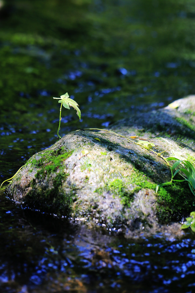 water-no-person-nature-outdoors-moss picture material