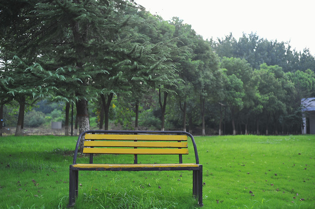 bench-wood-tree-garden-no-person picture material