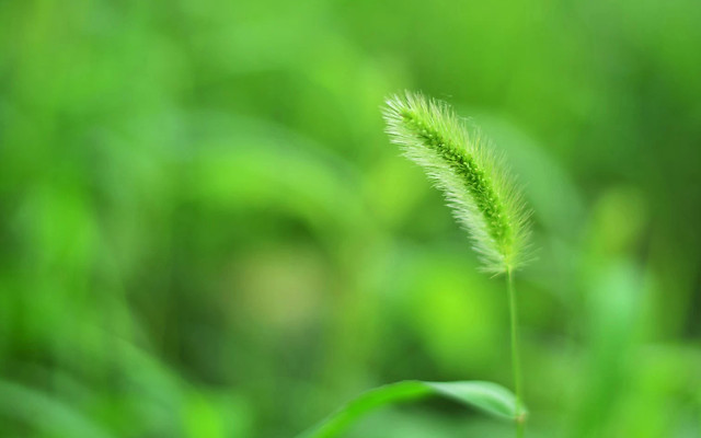 leaf-nature-flora-growth-grass picture material
