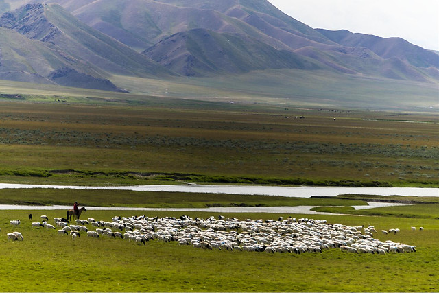 landscape-no-person-mountain-lake-sheep 图片素材
