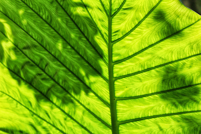leaf-flora-growth-no-person-lush picture material