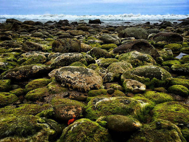 rock-sea-water-moss-landscape picture material