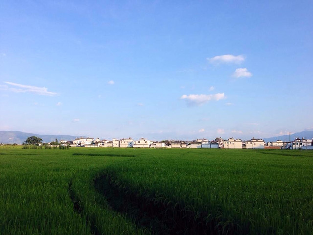 agriculture-landscape-farm-field-sky picture material