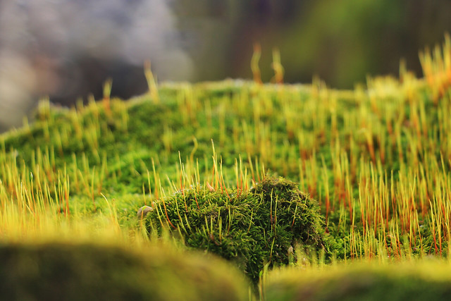 growth-grass-nature-no-person-field picture material