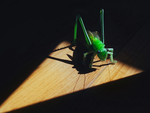 insect-no-person-wood-nature-dark picture material
