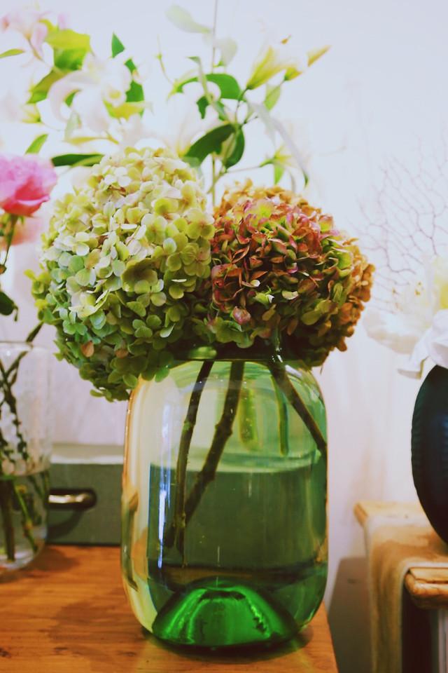 leaf-no-person-flower-nature-desktop picture material