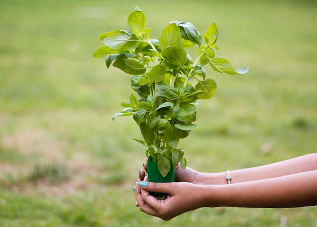 nature-summer-leaf-grass-growth 图片素材
