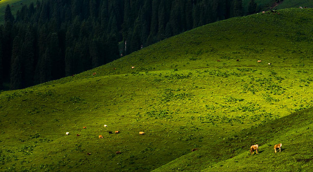 no-person-landscape-grassland-outdoors-tree picture material