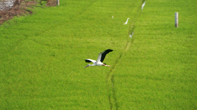 grass-bird-nature-no-person-outdoors 图片素材
