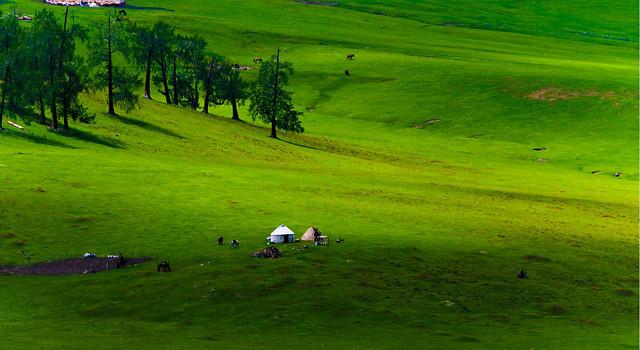 golf-grass-grassland-landscape-nature picture material