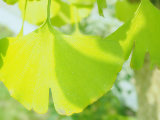 leaf-nature-flora-no-person-garden picture material
