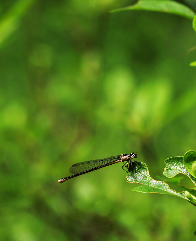 leaf-nature-insect-dragonfly-rain picture material