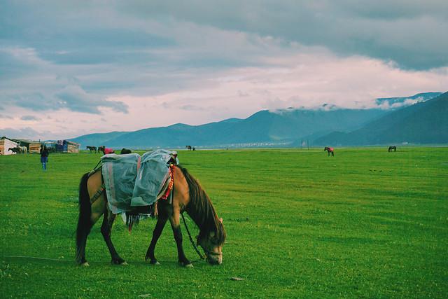 grassland-landscape-farm-field-grass picture material