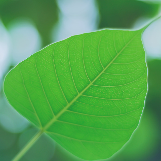 leaf-flora-growth-nature-summer picture material