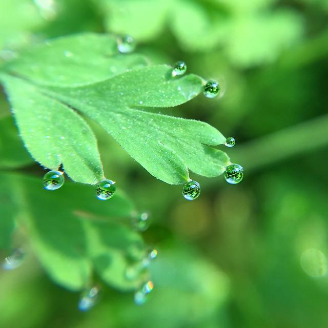 leaf-rain-dew-flora picture material