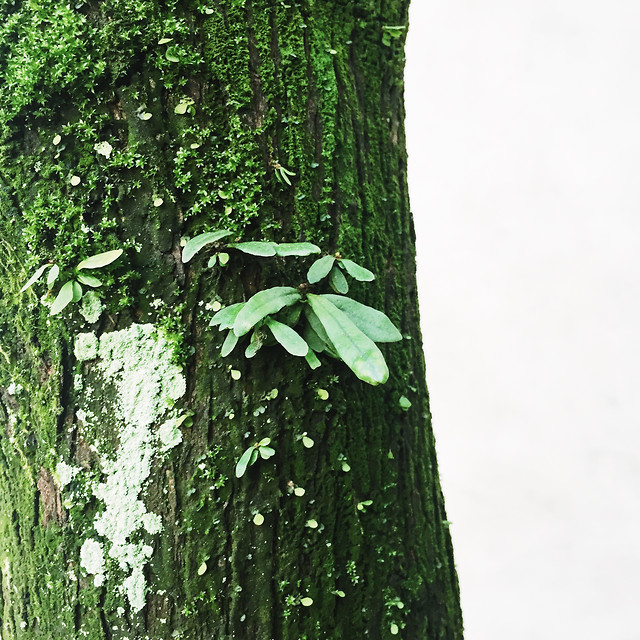 wood-tree-leaf-nature-environment 图片素材