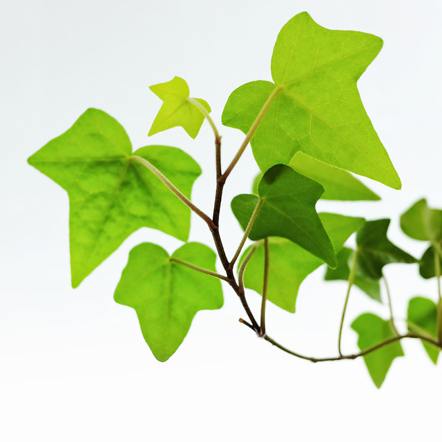 leaf-flora-growth-environment-nature picture material