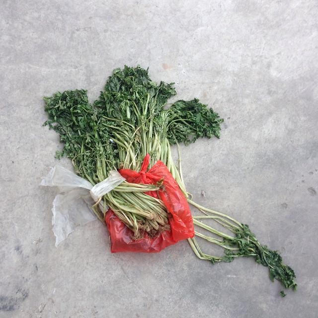leaf-no-person-desktop-nature-flora picture material