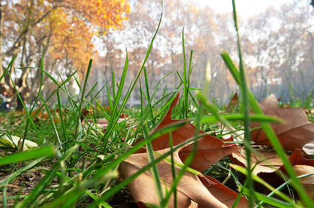grass-nature-leaf-fall-outdoors picture material