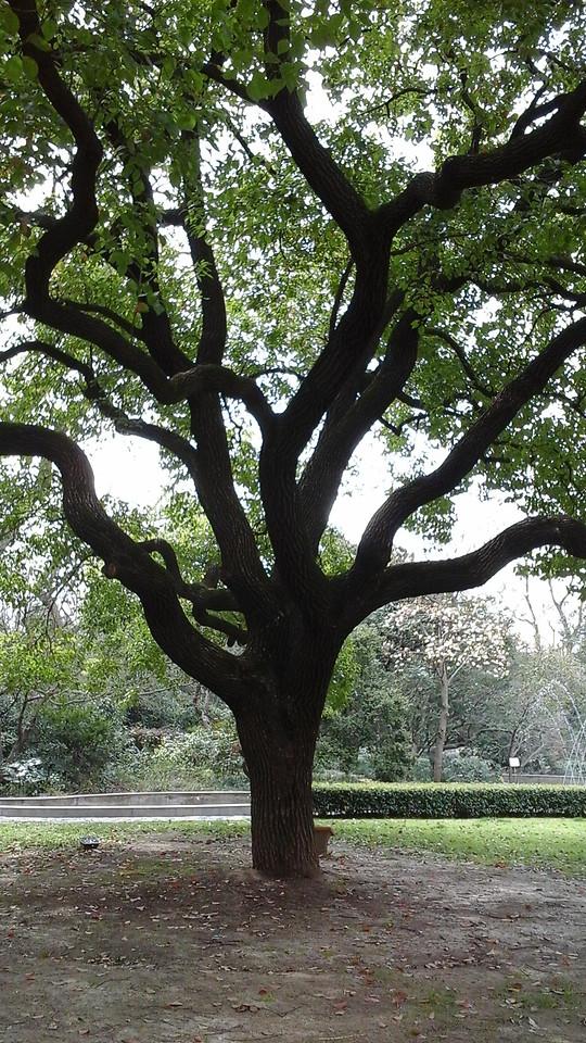 tree-landscape-wood-nature-park picture material