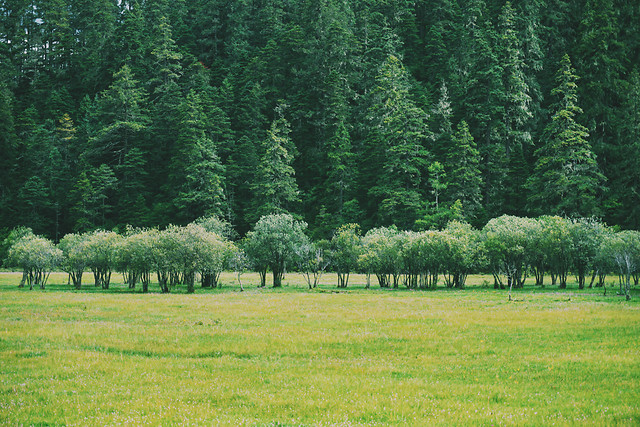landscape-tree-wood-nature-no-person picture material