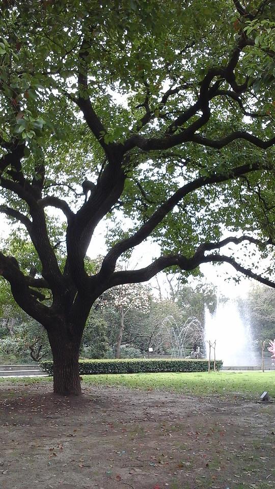 tree-landscape-park-environment-leaf picture material