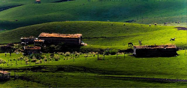 agriculture-farm-landscape-house-grass picture material