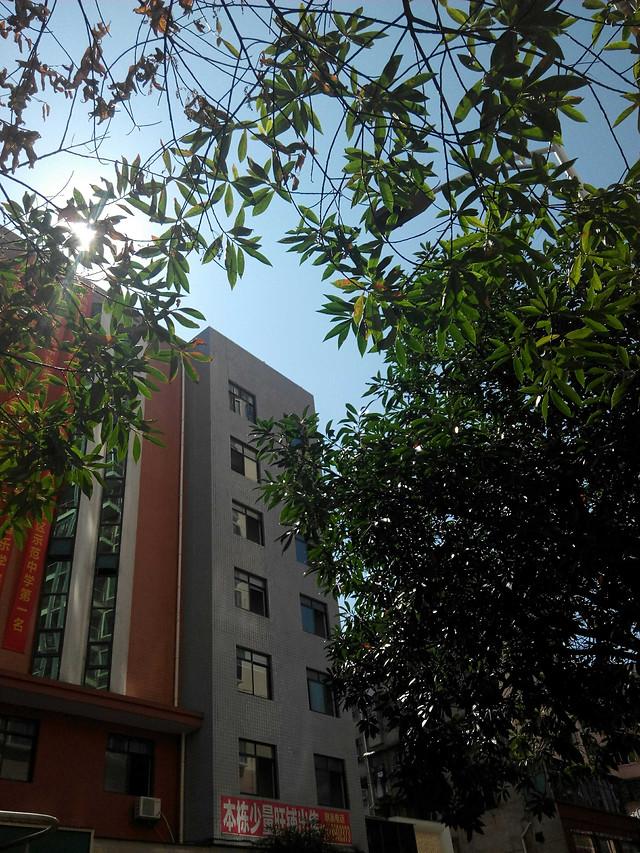 building-architecture-tree-city-no-person picture material