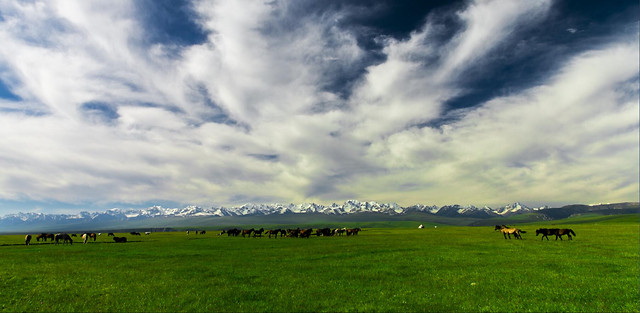 agriculture-grass-field-pasture-rural 图片素材