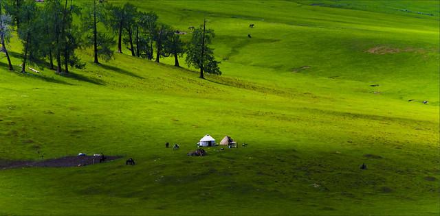 golf-grass-landscape-grassland-nature picture material