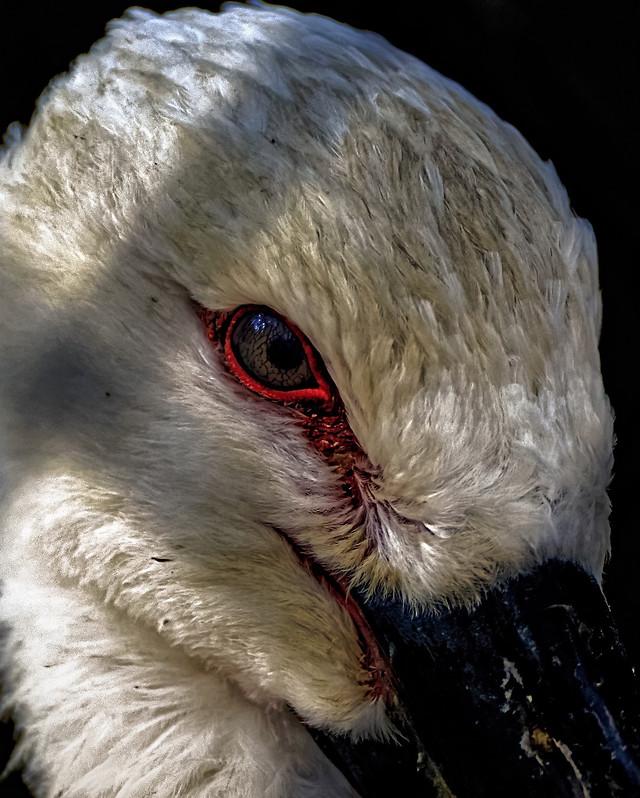 bird-portrait-wildlife-no-person-beak 图片素材