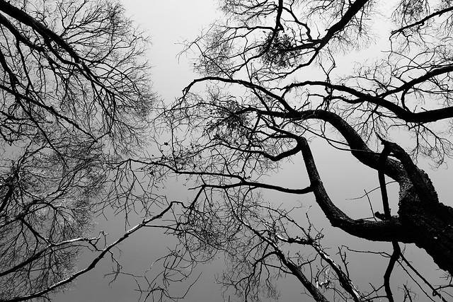 tree-wood-branch-winter-landscape 图片素材