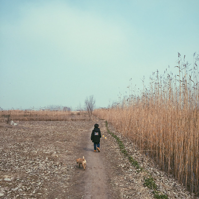 landscape-road-agriculture-outdoors-cropland picture material