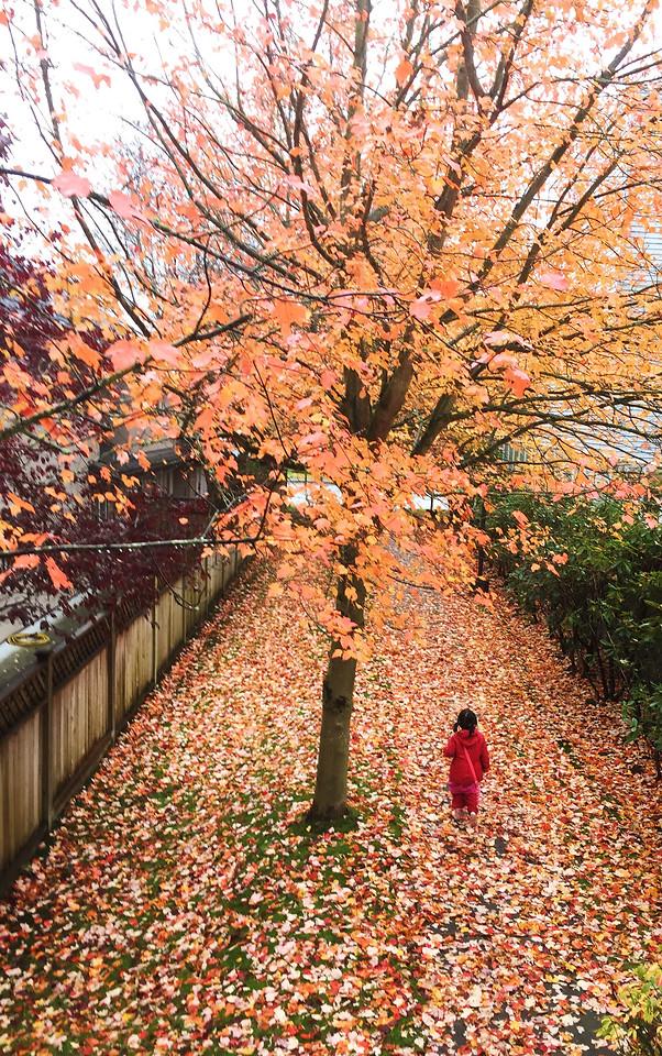 fall-leaf-season-tree-autumn picture material