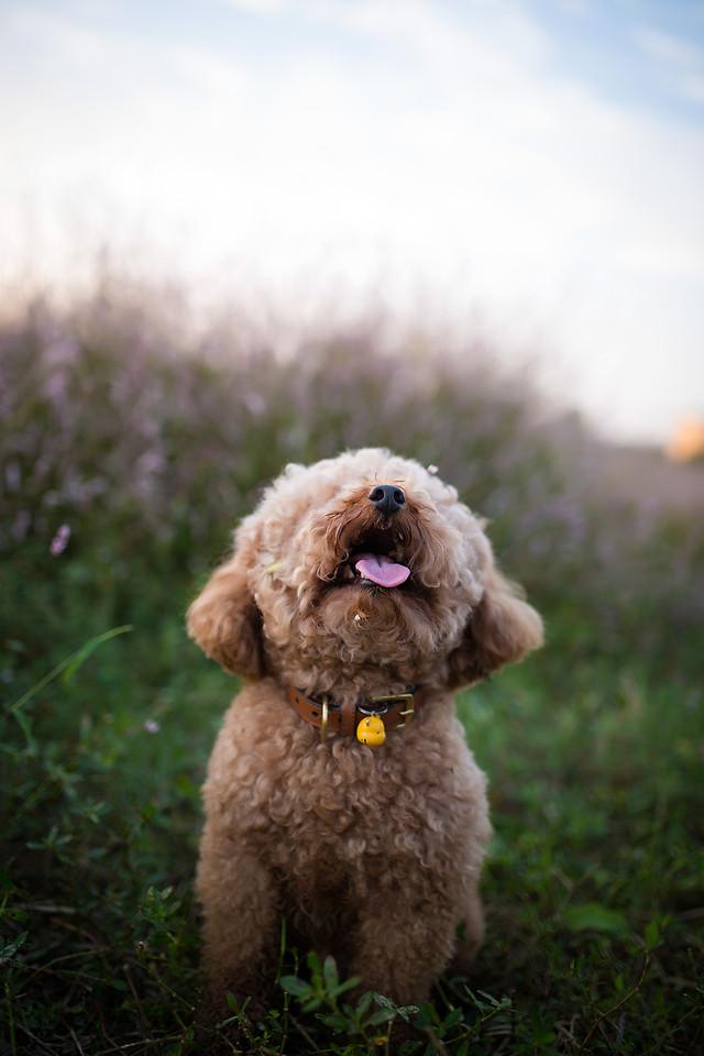 dog-no-person-mammal-cute-animal picture material