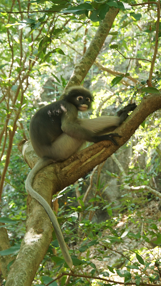 monkey-primate-jungle-tree-wildlife picture material