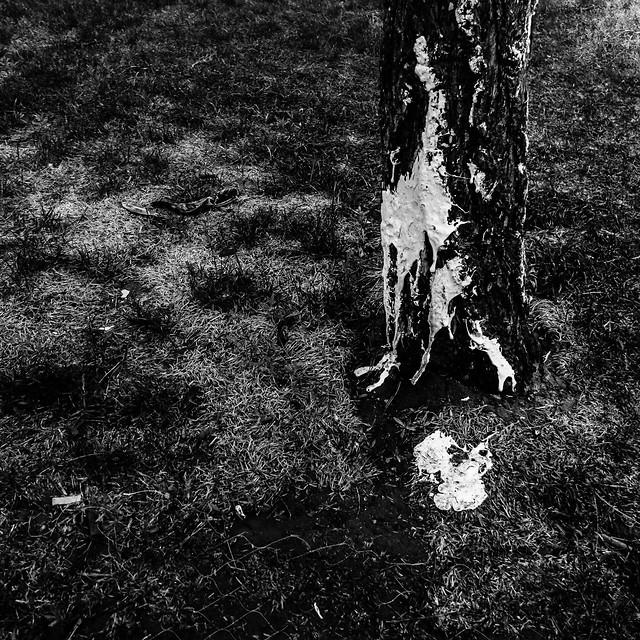 no-person-monochrome-black-people-black-white picture material