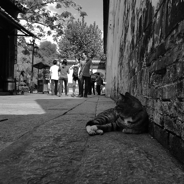 people-street-monochrome-dog-one 图片素材