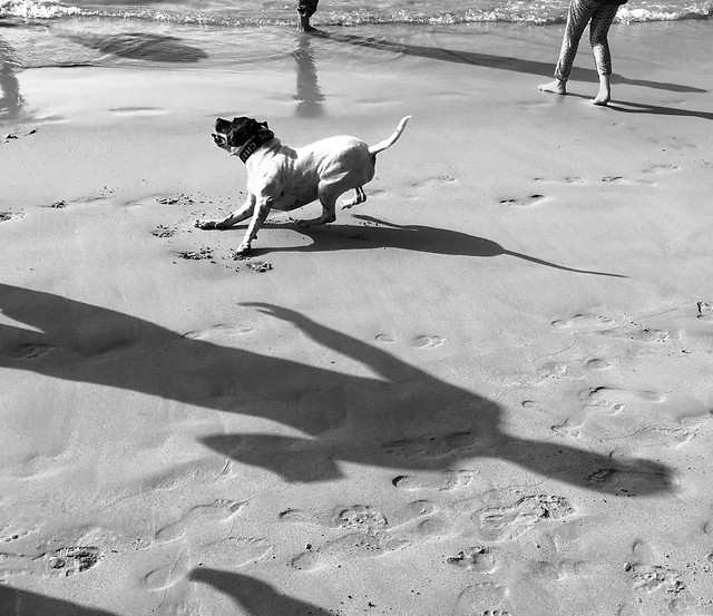 beach-dog-sand-people-canine picture material