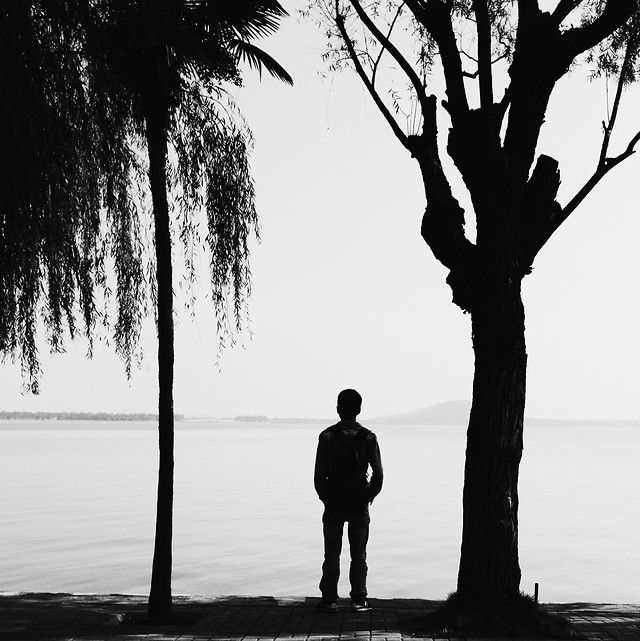 tree-silhouette-backlit-silhouetted-beach picture material