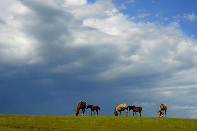 no-person-grassland-grass-sky-mammal picture material
