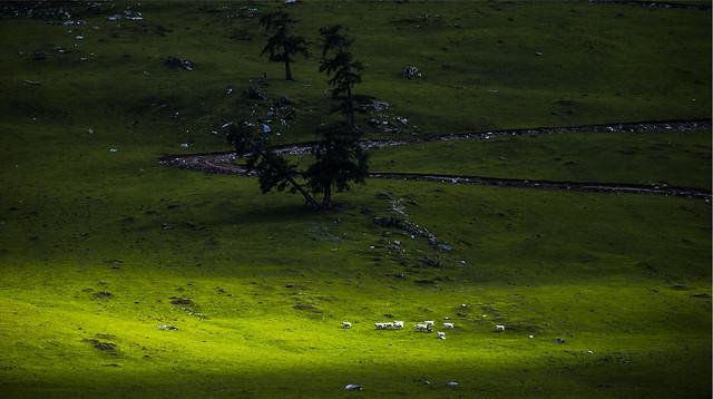landscape-no-person-grass-nature-grassland picture material