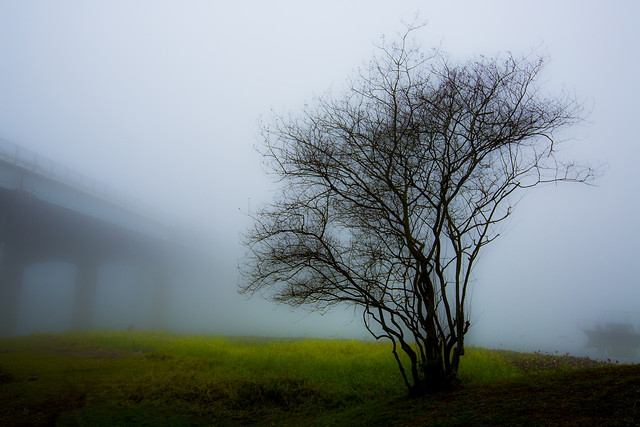 fog-landscape-mist-tree-dawn picture material